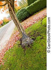 나무, 팬, 동안에, 단풍나무, 계절, 경향, 가을, 갈퀴