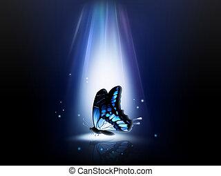나비, 밤