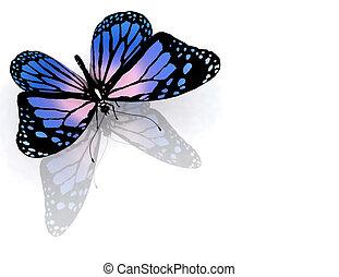나비, 백색