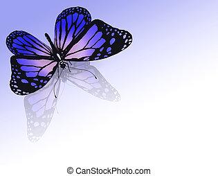 나비 색, 배경