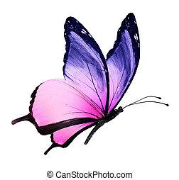 나비 색, 백색, 나는 듯이 빠른, 고립된