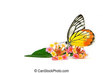나비, 아름다운, 꽃