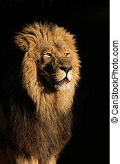 남성, 크게, 사자, african