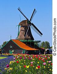 네덜란드, 풍차