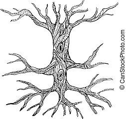 노출한, 간선, 나무, 뿌리, 화려한