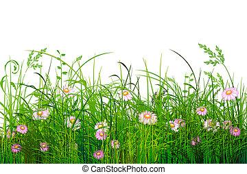 녹색, 꽃, 풀