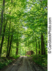 녹색, 봄, 폴란드, 명란한, 숲