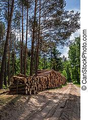 녹색, 폴란드, 명란한, 숲, 여름