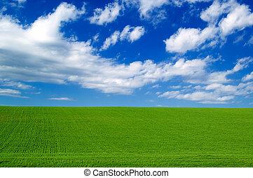 녹색, field.