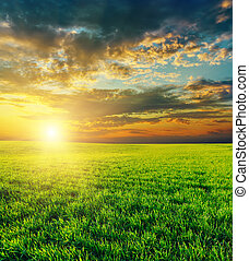 농업의, 위의, 일몰, 녹색 분야