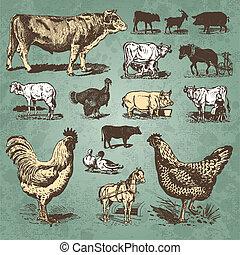 농장, 포도 수확, 세트, 동물, (vector)
