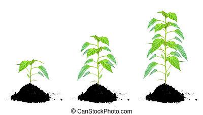 농토, 식물, 녹색
