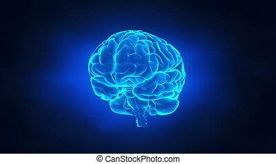 뇌, 개념, 여행