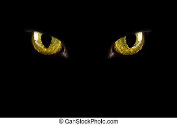 눈, halloween, 백열하는 것, 배경, dark., 고양이