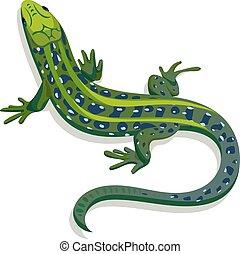 도마뱀, 삽화, 벡터, 녹색