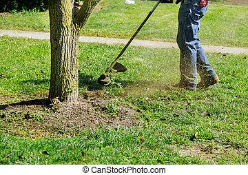 도태의, 녹색, 절단, 손질하는 사람, 손, 남자, 초점, 클로우즈업, 을 사용하여, 잔디 풀 베는 기계, 풀