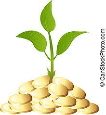 돈 식물, 녹색, 나이 적은 편의