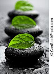 돌, 물, 잎, 은 떨어진다, 선