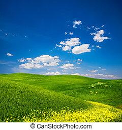 들판, 꽃, 녹색, 황색