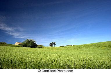 들판, 녹색의 풍경