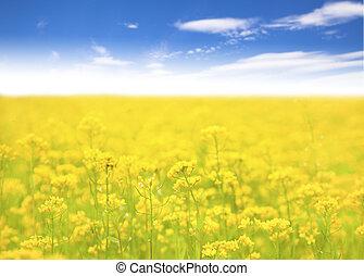 들판, 배경, 하늘색, 노란 꽃