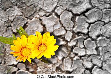땅, 건조한, 개념, 꽃 같은, 꽃, persistence.