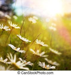 떼어내다, 풀, 배경, 여름, 예술, 꽃, 자연