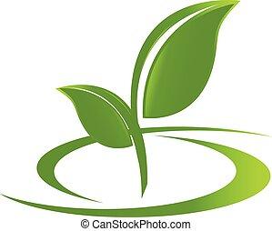 로고, 건강, 자연, 은 잎이 난다