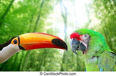 머코야자나무, toco, 앵무새, toucan, 군, 녹색