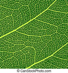 모듬 명령, 잎, 벡터, 직물