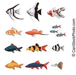 물고기, 바다에서는 서투른, 수집