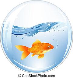 물, 금, 공, fish