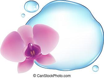 물, 난초, 위의