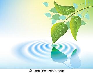 물 파문, 잎