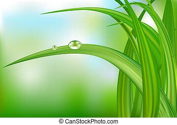 물, drops., 풀, 녹색