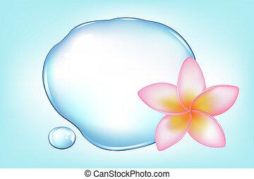 물, fragipani, 위의