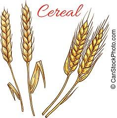 밀, 호밀, 고립된, 벡터, 곡물, 귀, 아이콘