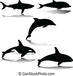 바다, 삽화, 동물