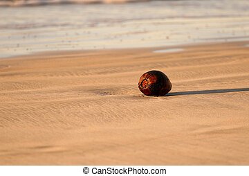 바닷가, 코코넛