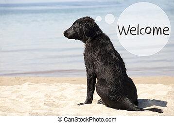 바닷가, 환영, 개, 모래의, 원본