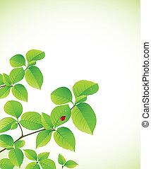 배경, 가지, 녹색