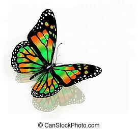 배경, 나비, 고립된, 백색, 색, 녹색