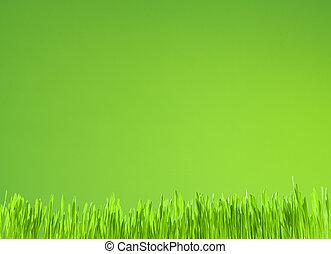 배경, 성장, 녹색, 날씬한, 신선한, 풀