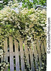 백색, 관목, 고매하다, 꽃 같은