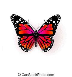 백색, 나비, 고립된