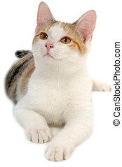 백색 배경, 고양이