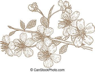 버찌, 삽화, 꽃