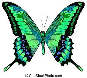 벡터, 배경, 나비, 아름다운, 고립된, 백색, 청록색, 삽화