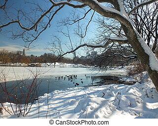 본부, 겨울, -, 공원, 호수, nyc