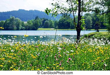 봄, 목초지